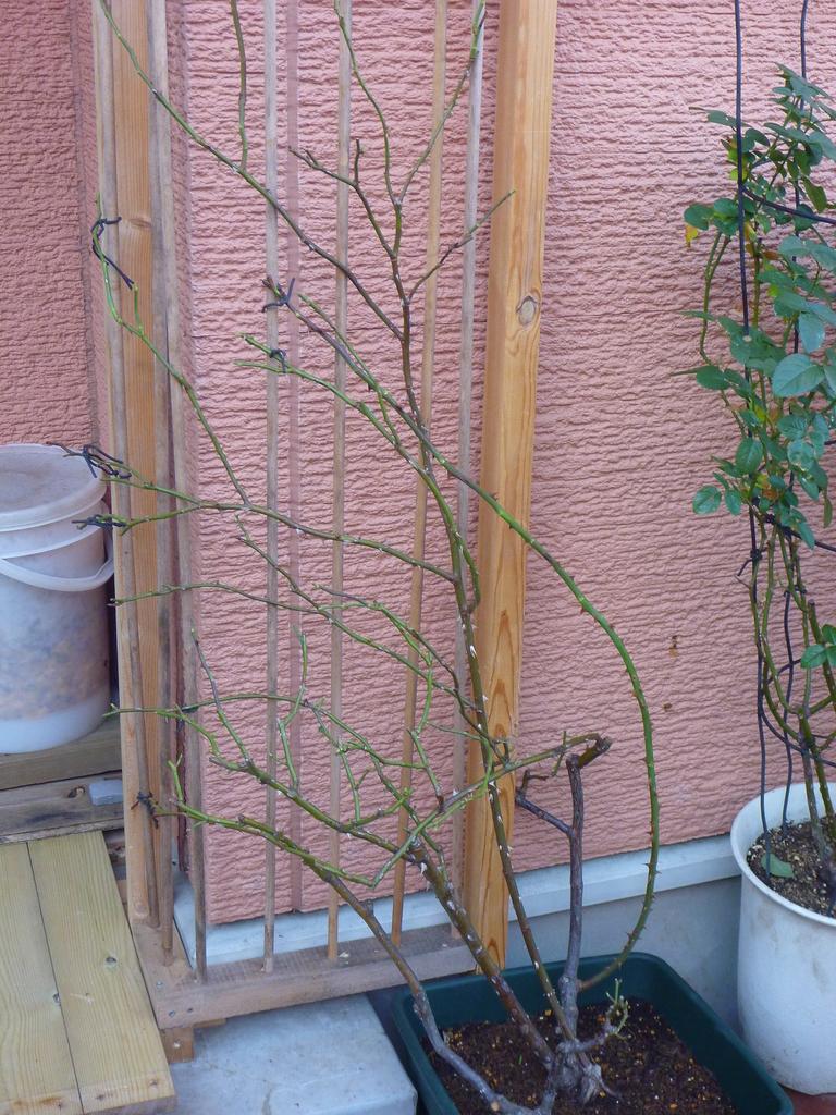 f:id:verandarosegarden:20190101151538j:plain