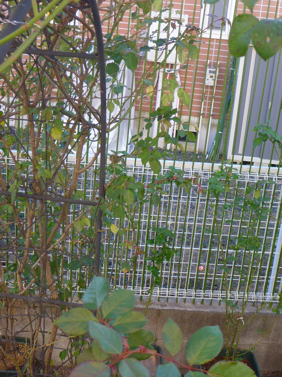 f:id:verandarosegarden:20200101170408j:plain