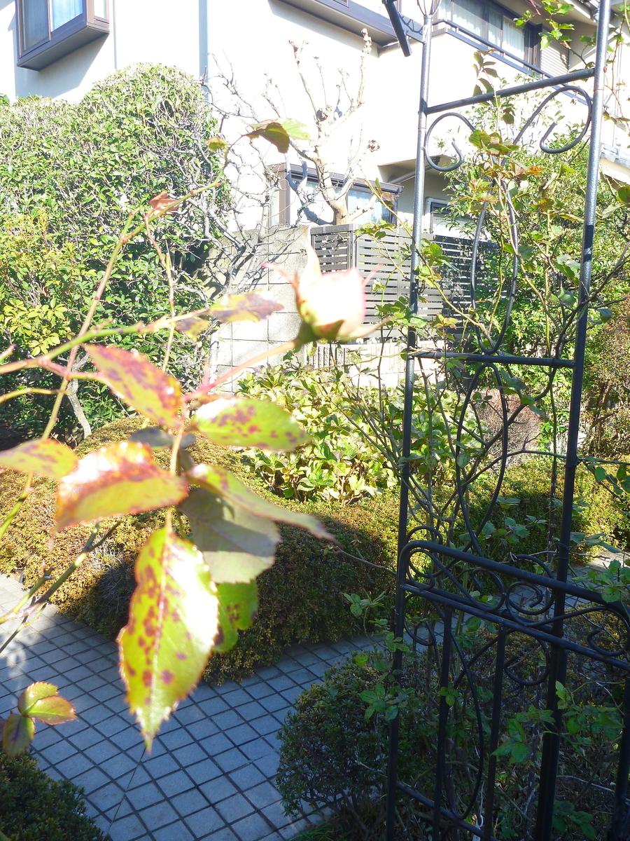 f:id:verandarosegarden:20200106202328j:plain