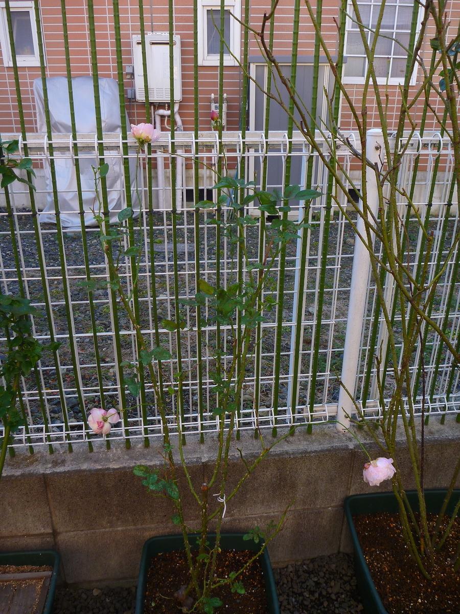 f:id:verandarosegarden:20200111170239j:plain