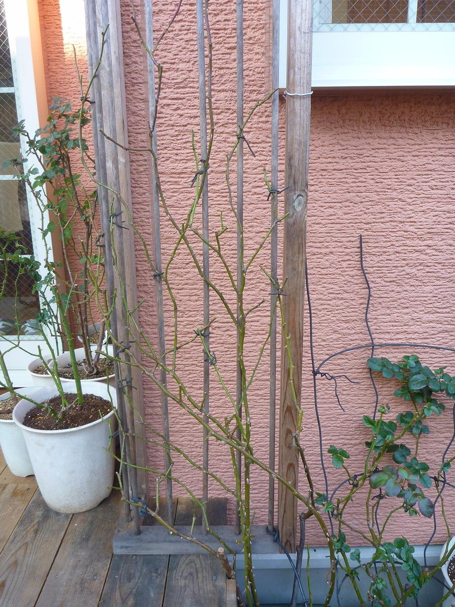 f:id:verandarosegarden:20200111211352j:plain
