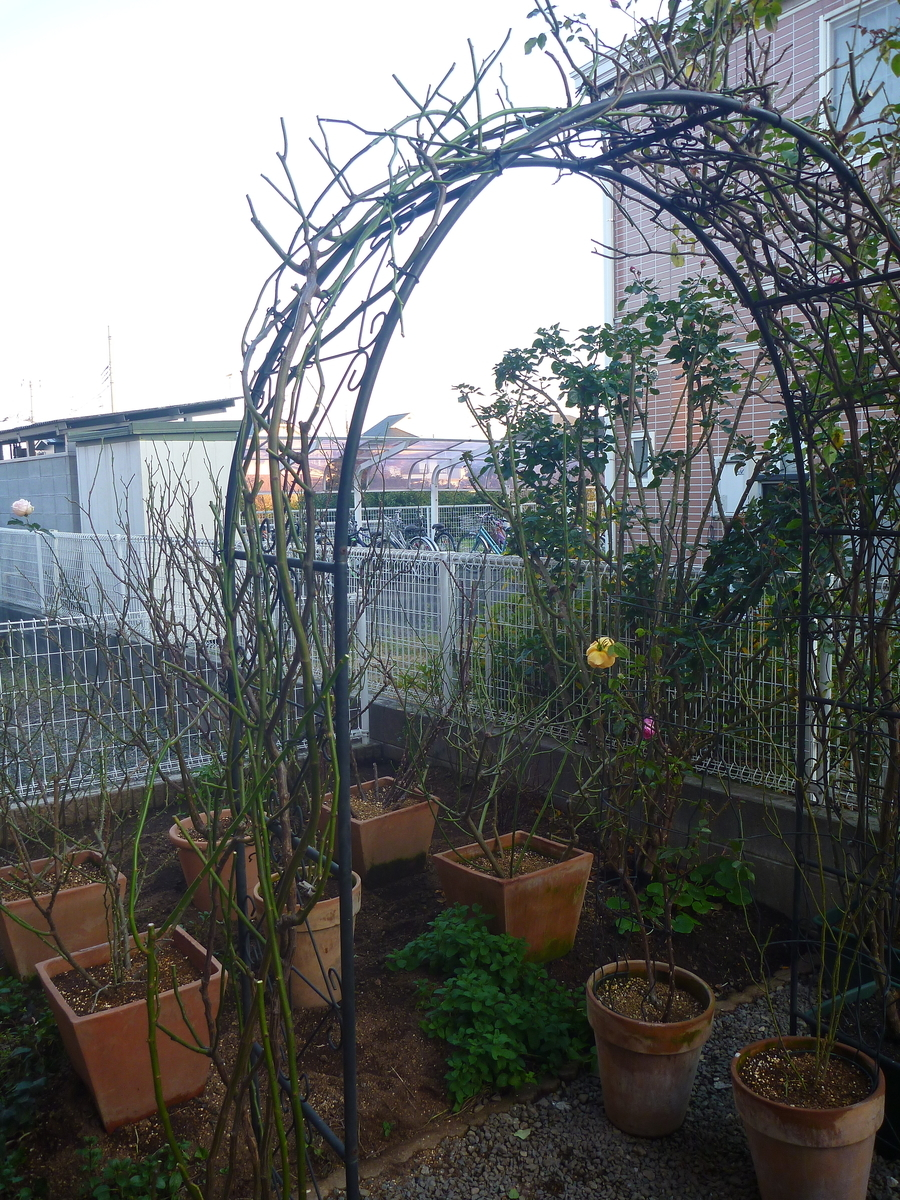 f:id:verandarosegarden:20200113172751j:plain