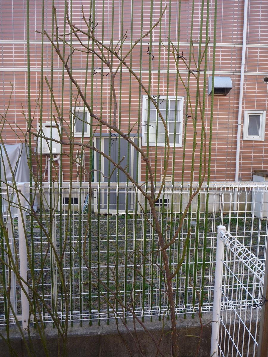 f:id:verandarosegarden:20200114191503j:plain