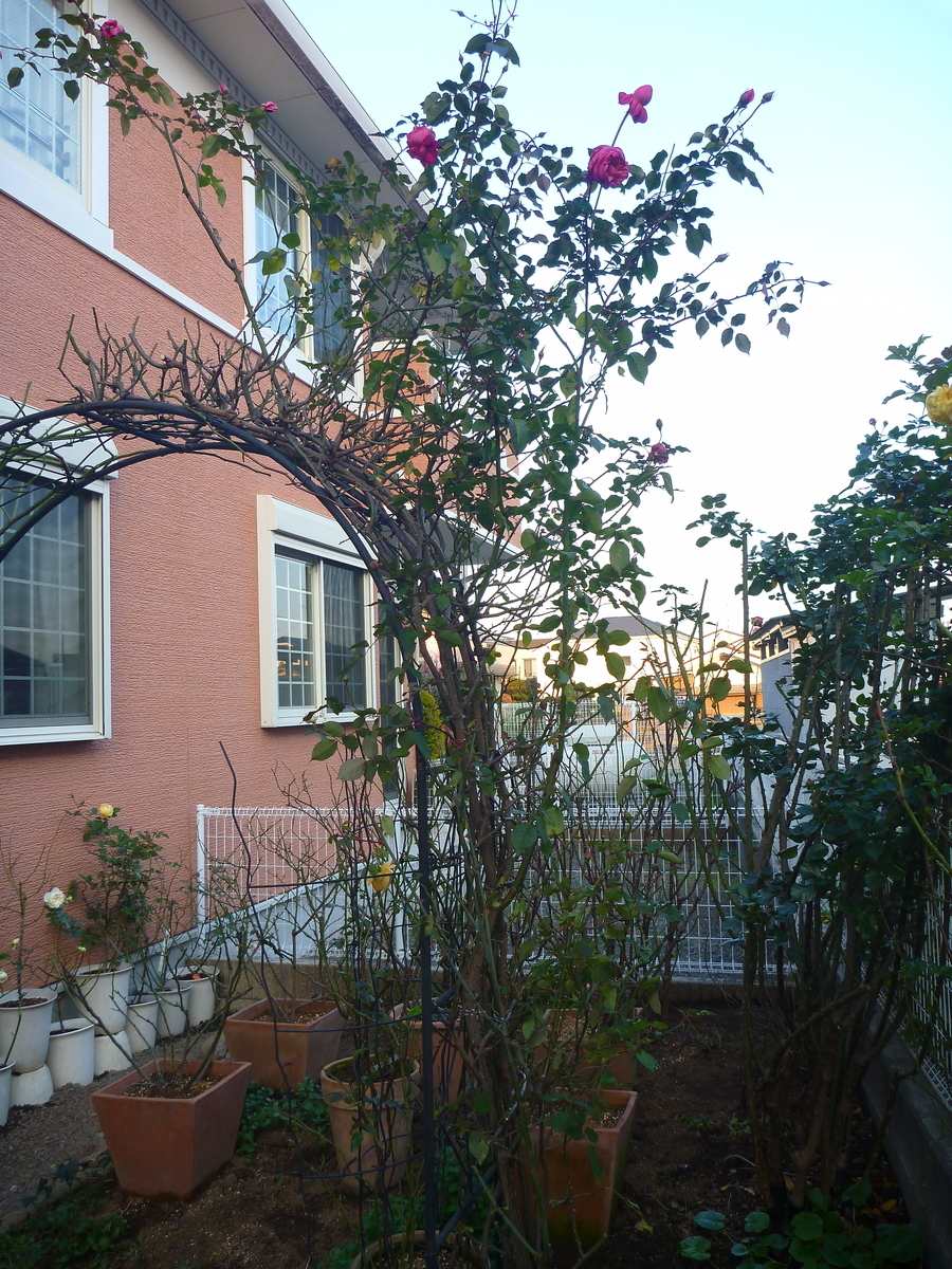 f:id:verandarosegarden:20200114194402j:plain