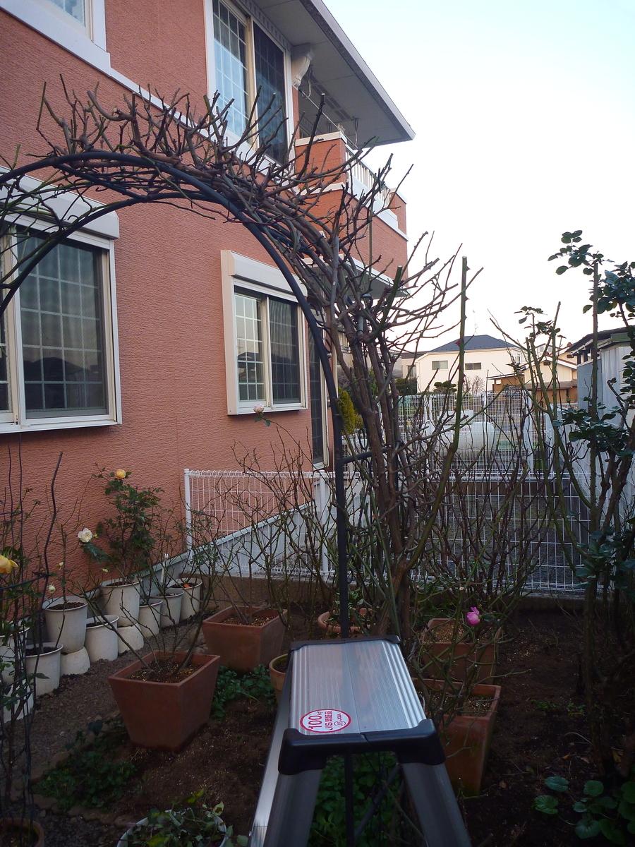 f:id:verandarosegarden:20200114194611j:plain