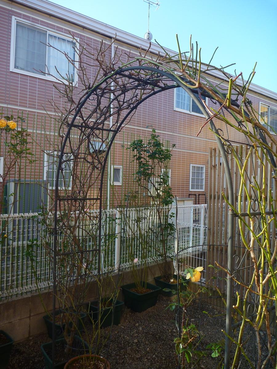 f:id:verandarosegarden:20200114194713j:plain