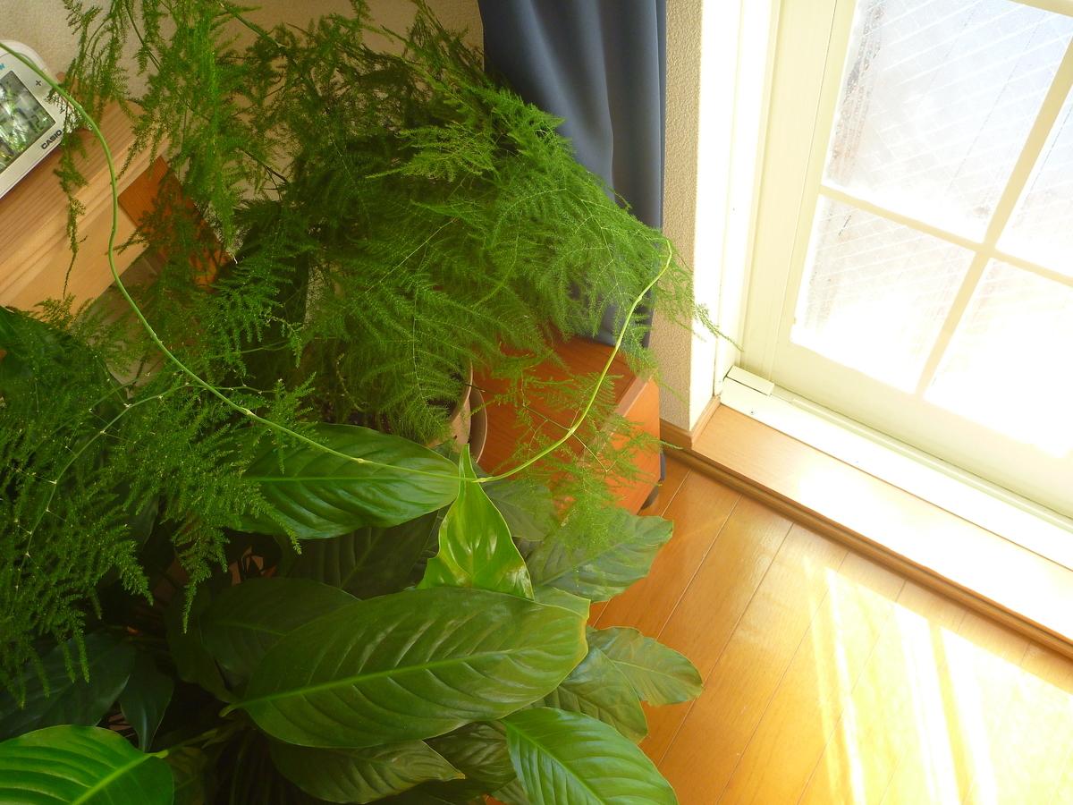 f:id:verandarosegarden:20200121095910j:plain