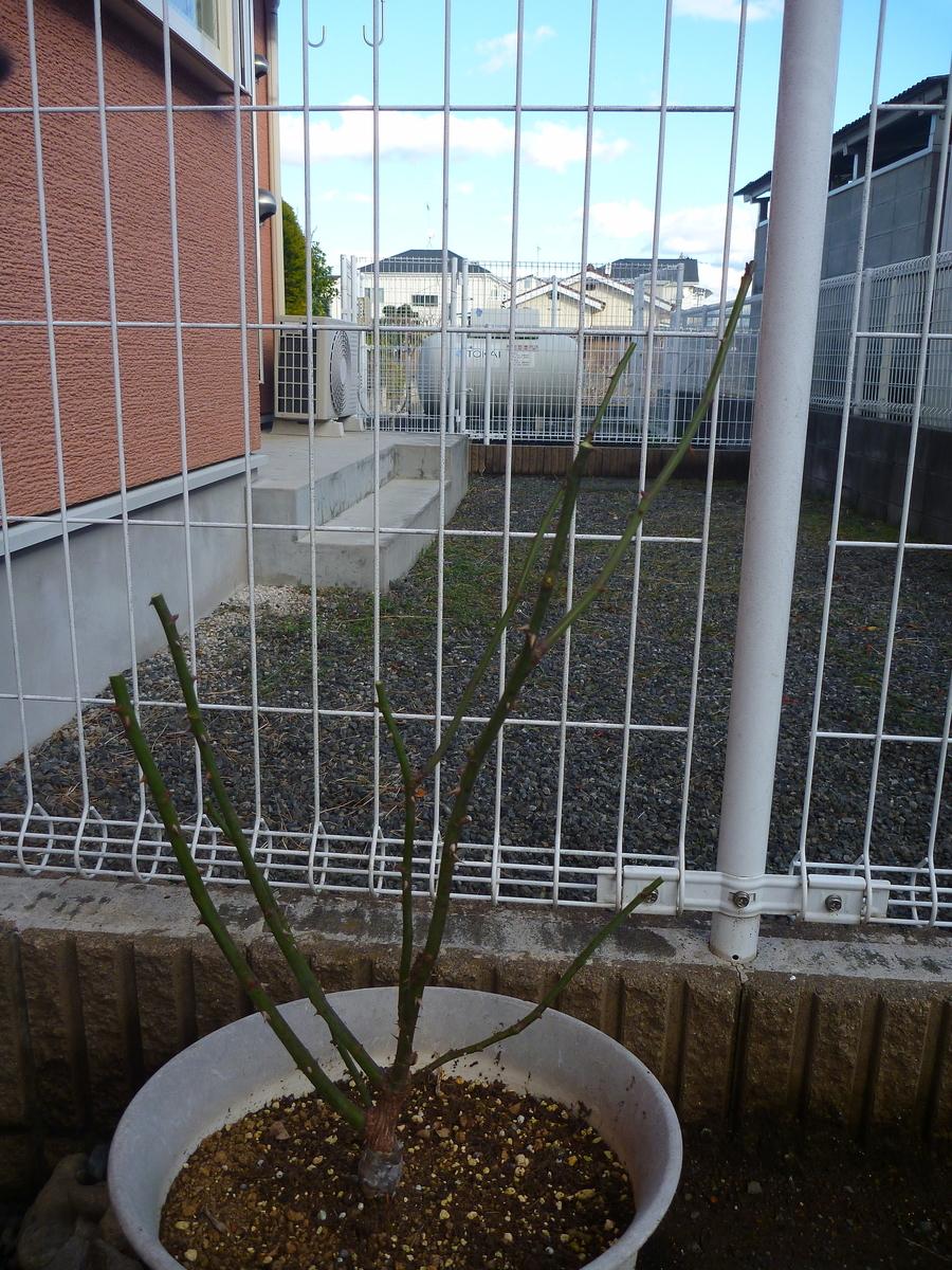 f:id:verandarosegarden:20200129155745j:plain