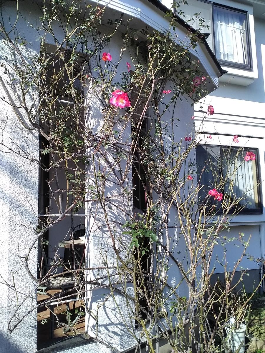 f:id:verandarosegarden:20200204103505j:plain