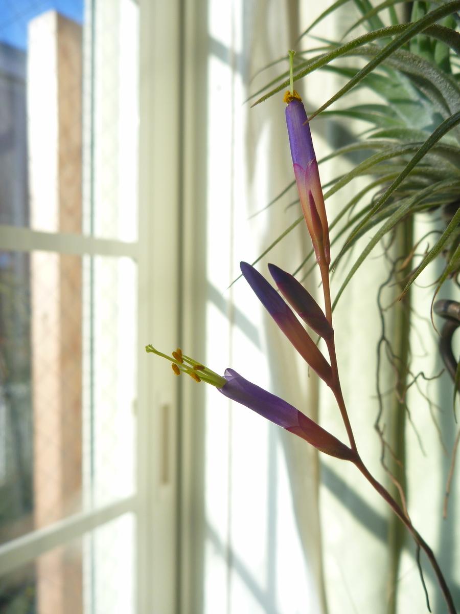 f:id:verandarosegarden:20200301081501j:plain