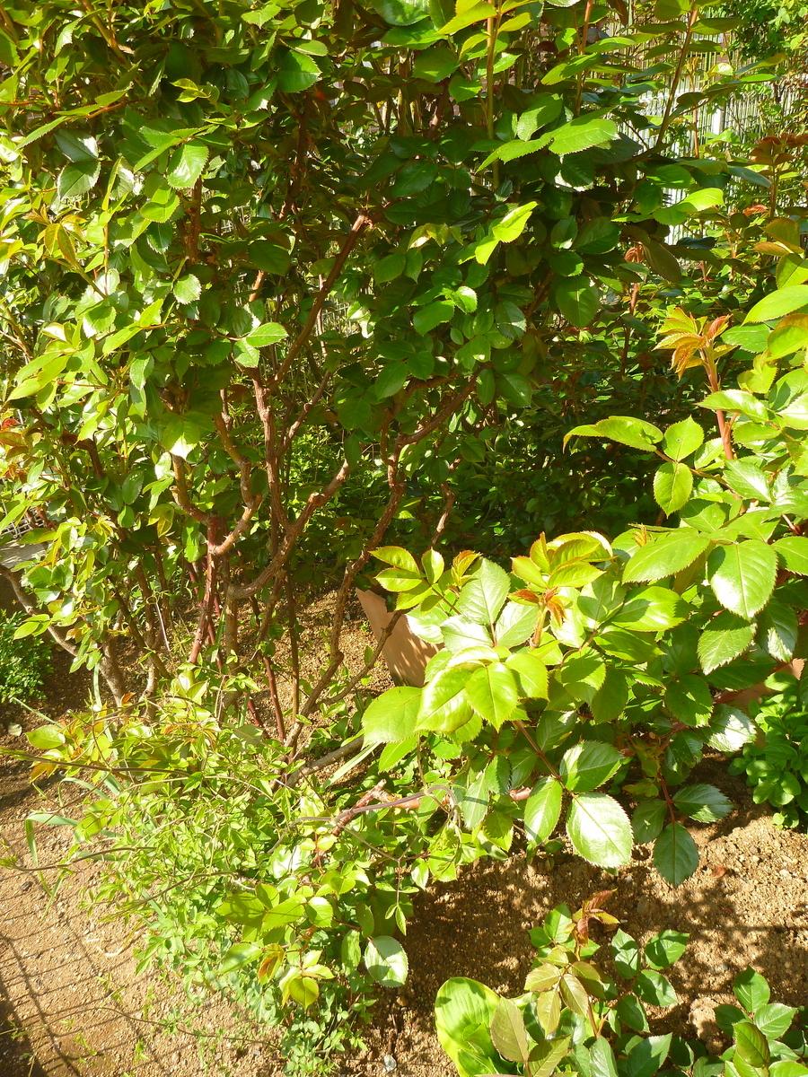 f:id:verandarosegarden:20200411155630j:plain