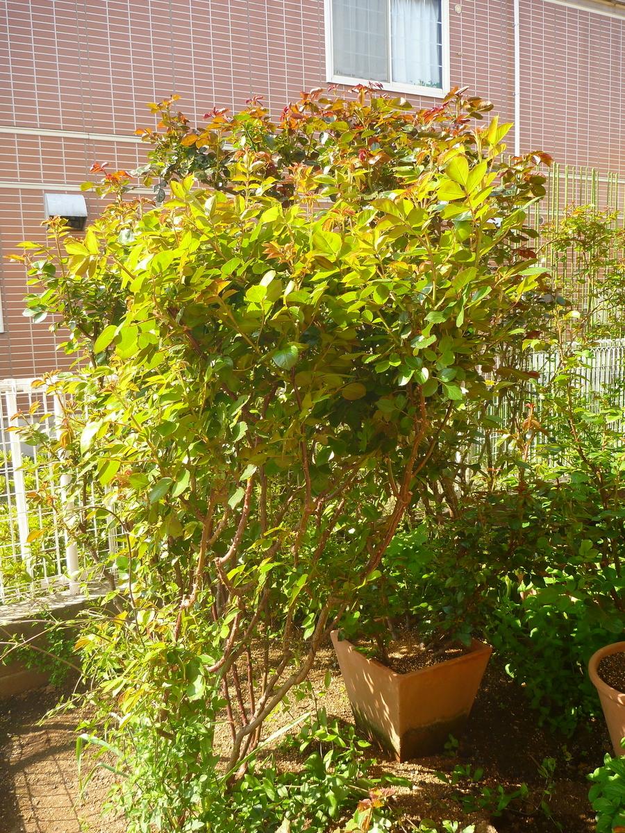 f:id:verandarosegarden:20200411160209j:plain