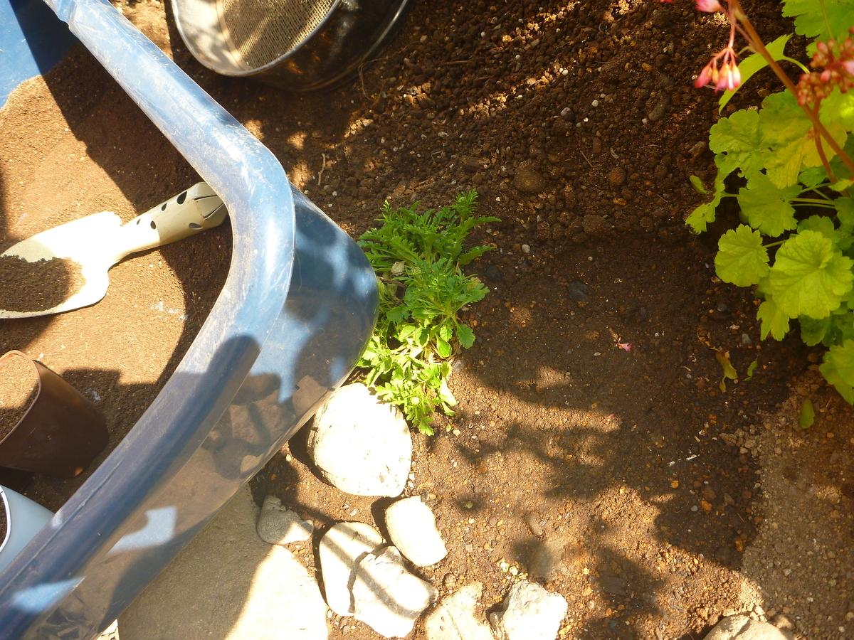 f:id:verandarosegarden:20200502195245j:plain