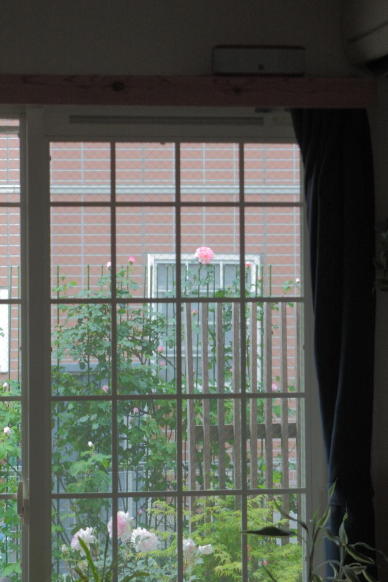 f:id:verandarosegarden:20200510072420j:plain