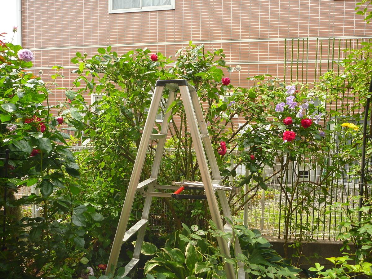 f:id:verandarosegarden:20200528161525j:plain