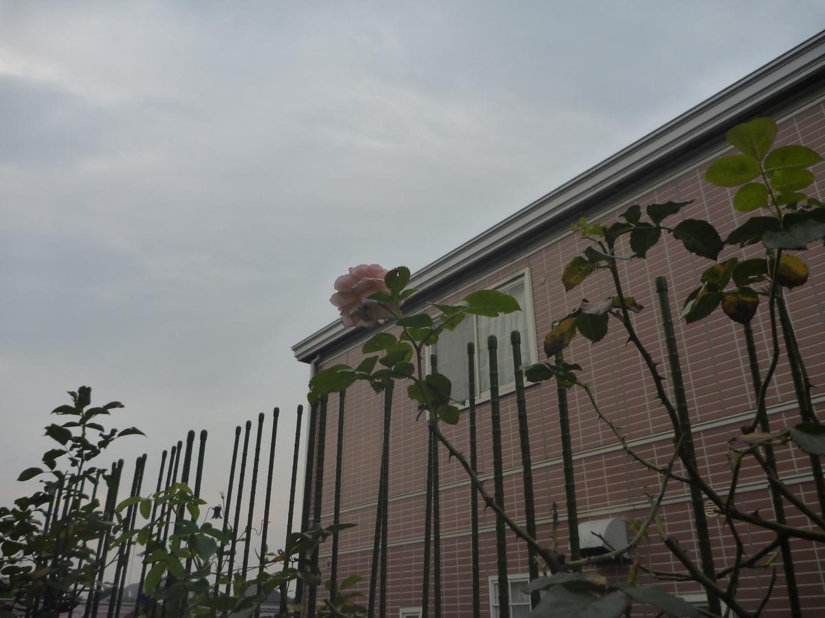 f:id:verandarosegarden:20200809173043j:plain