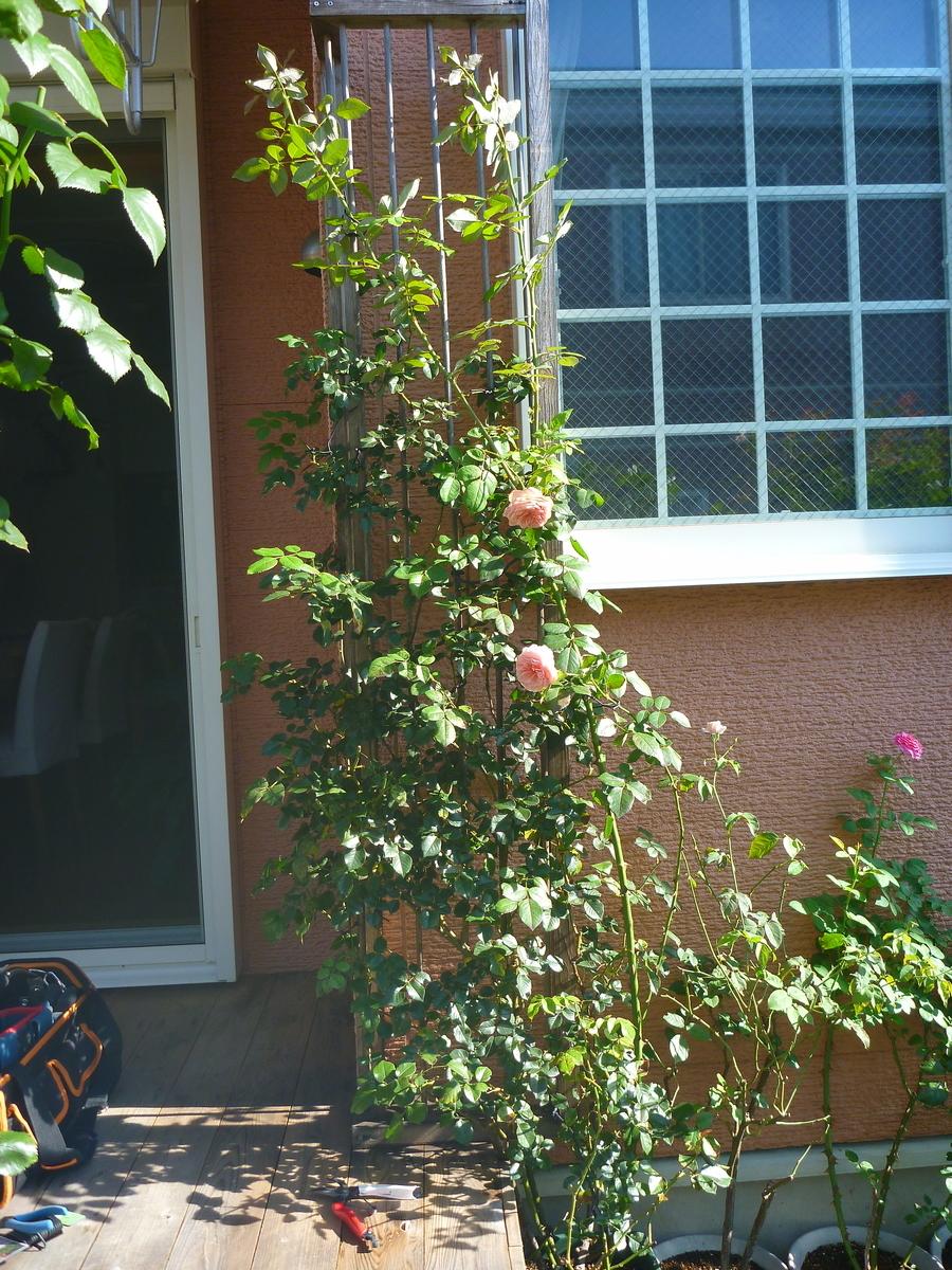 f:id:verandarosegarden:20200814133007j:plain