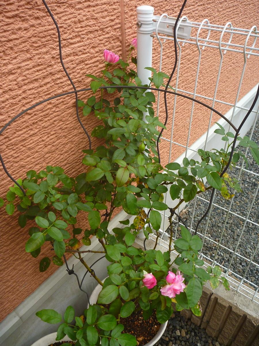 f:id:verandarosegarden:20200920114521j:plain