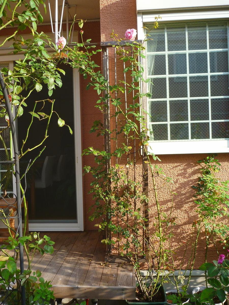 f:id:verandarosegarden:20201006071607j:plain