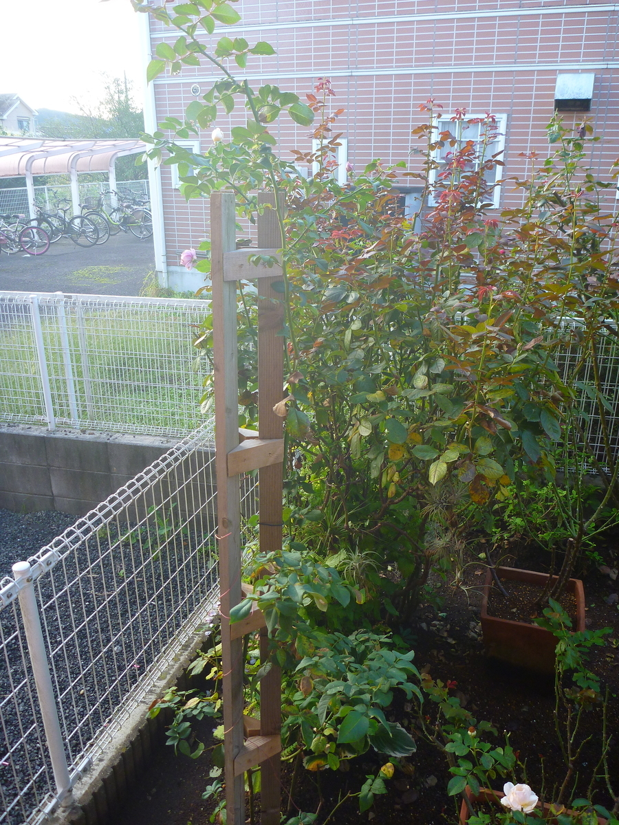 f:id:verandarosegarden:20201014070750j:plain