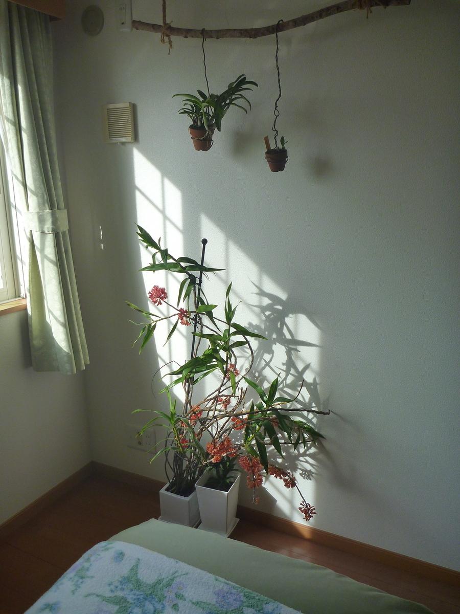 f:id:verandarosegarden:20201020112827j:plain
