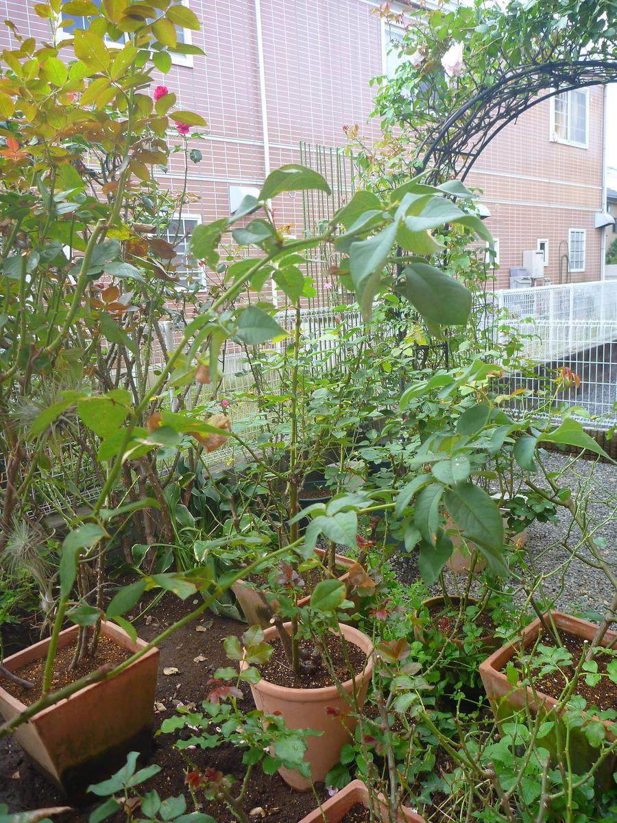 f:id:verandarosegarden:20201020142027j:plain