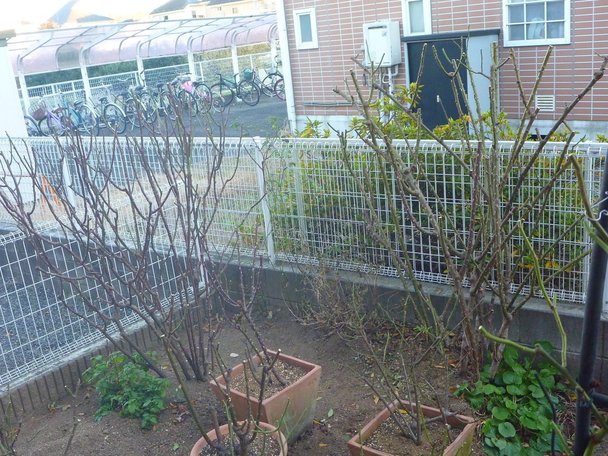 f:id:verandarosegarden:20210102213201j:plain