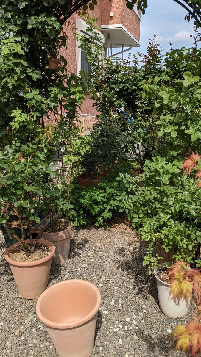 f:id:verandarosegarden:20210611194110j:plain