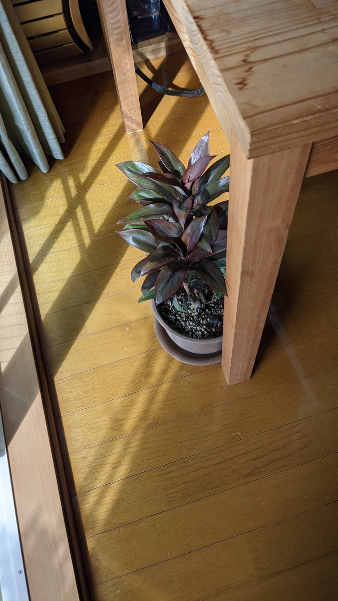 f:id:verandarosegarden:20210929155007j:plain