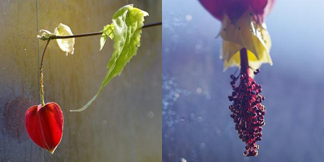 数日前からいきなり変化した。いったい何が出た?!この植物は何?