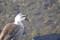 [鳥][鴨]
