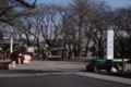 今は木立も閑散だが、桜の季節は華やかだよ