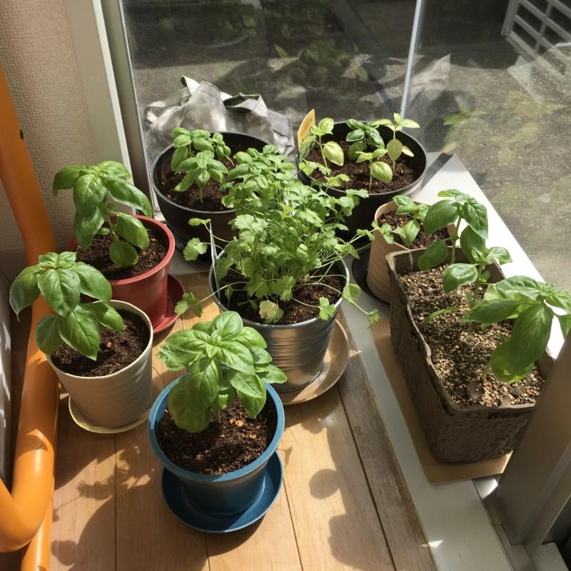 ハウス栽培
