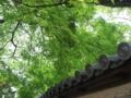 [奈良]新緑