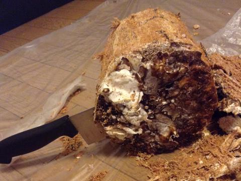 まるでチョコのロールケーキのようなカワラ材産卵木