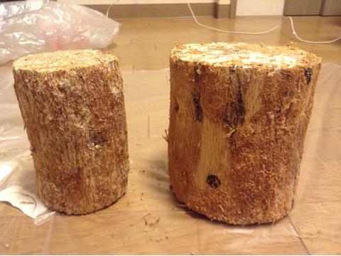 皮を削って綺麗になったカワラ材産卵木