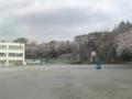 母校と桜。