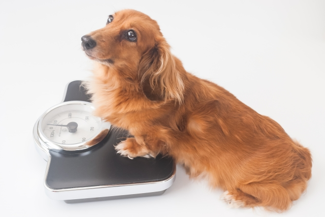 f:id:vet-nutrition:20190527115645j:plain