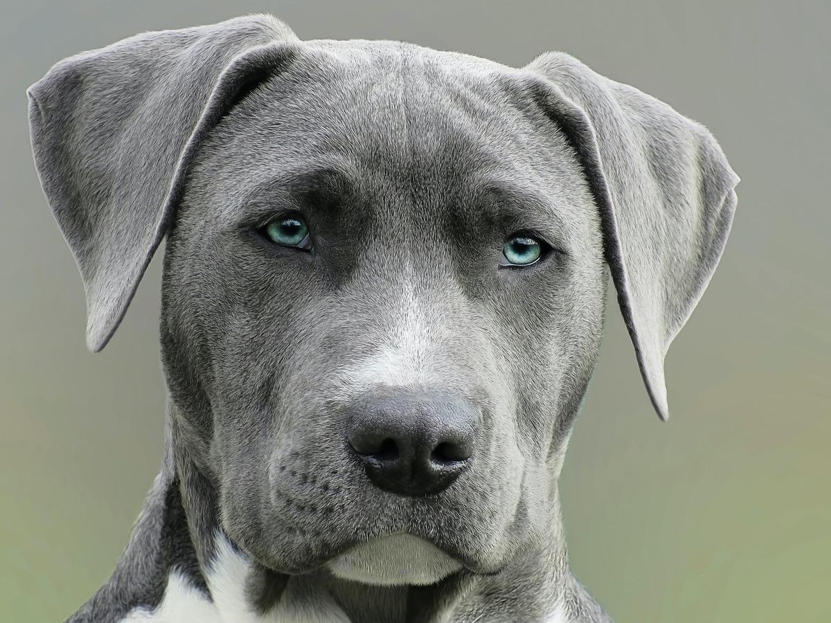 毎月飲み忘れずに犬のフィラリア予防薬を飲ませる理由!