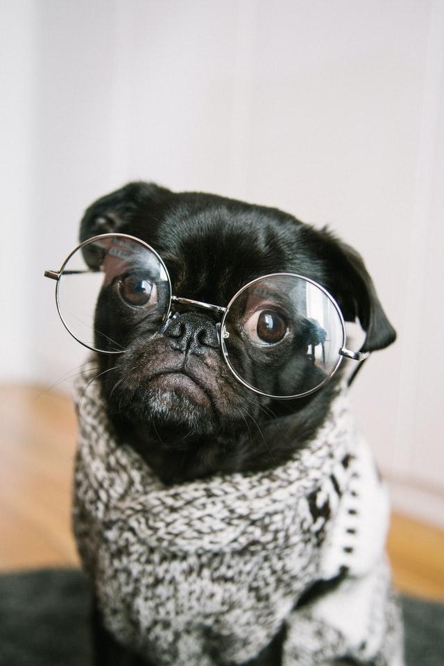 犬のフィラリア予防期間!