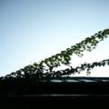 アサノソラ  by ta-san**