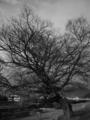 冬の樹  by ta-san**