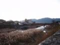 河原のすすき by ta-san**