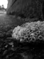 堕ちた蜂の巣 by ta-san**