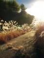 光の道  by ta-san**