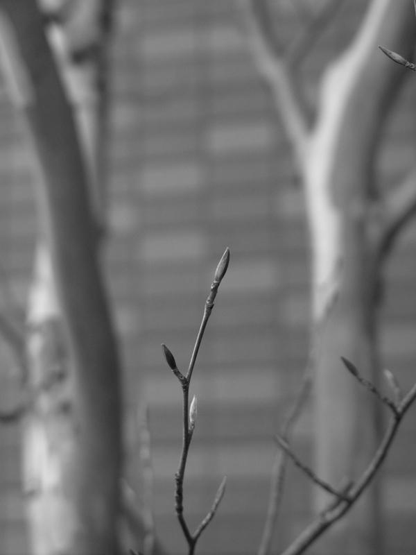 木の芽  by ta-san**
