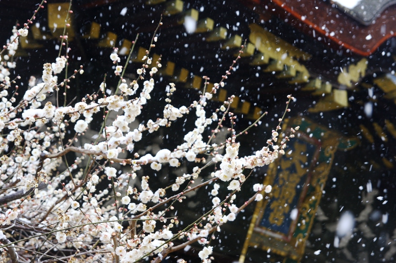 Plum tree, snow, and god BY kzfe