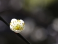 One plum blossoms  BY kzfe