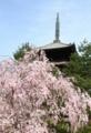 SIDAREZAKURA & pagoda  by kzfe