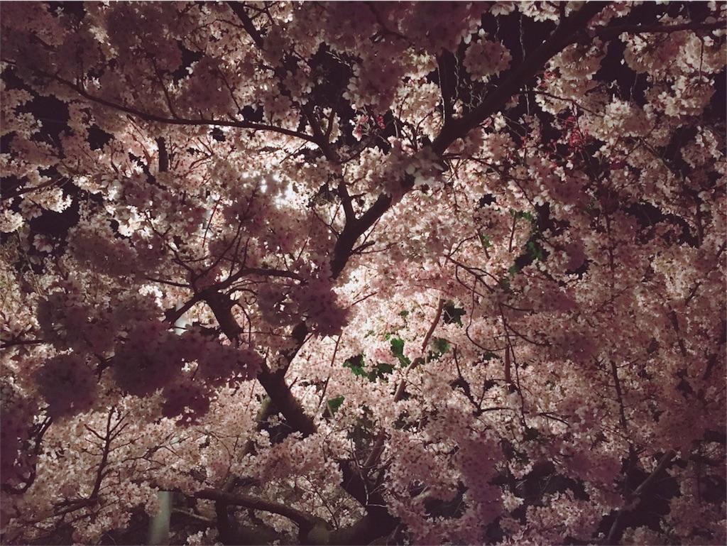 f:id:vika-kyoto:20180406132504j:image